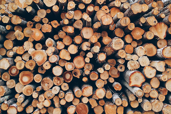 exportar madera