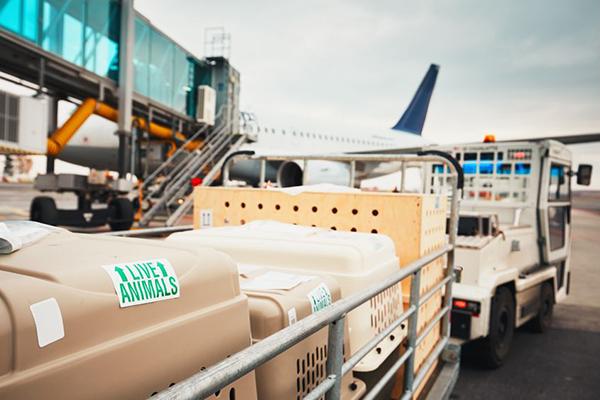 Importacion y exportación de animales