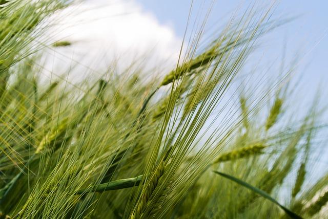 Vegetal con certificados fitosanitarios