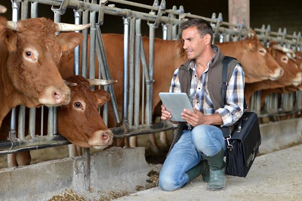 Control veterinario para la exportación de animales vivos
